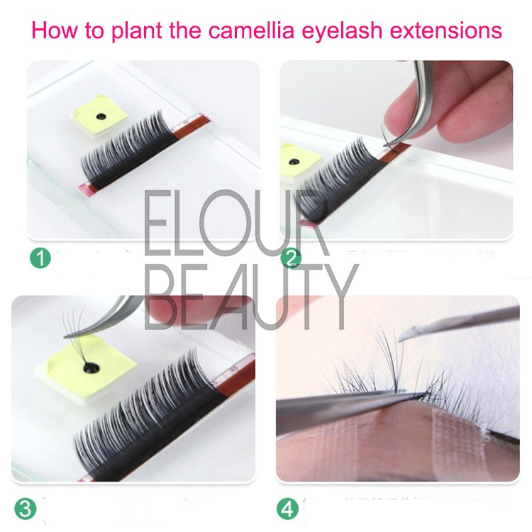 How to plant camellia lash extensions.jpg