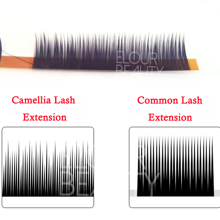 comparation for camellia lash extensions and common lash extensions China.jpg
